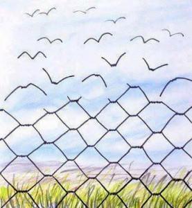 Prikkeldraad wordt vogeltjes